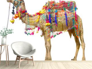 Camel with traditional decoration isolated on white