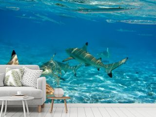 Sharks over a coral reef at ocean