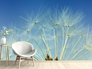Dandelion abstract background, closeup flowers feather