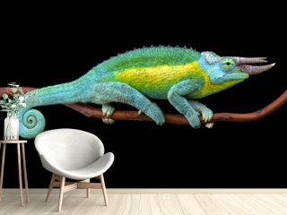 Jackson's chameleon (Trioceros jacksonii jacksonii)