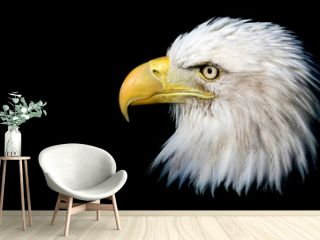 Portrait of an American bald eagle against a black background with room for text