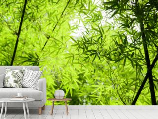bamboo forest with green leaves