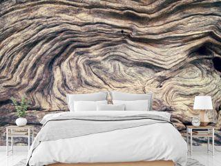 Bark Tree wood texture