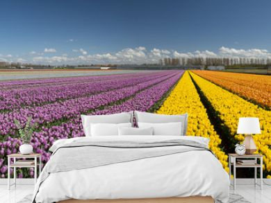 Cultivation of tulips