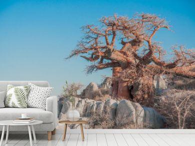 A Baobab Tree between Granite Boulders.