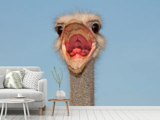 Ostrich shouts, Struthio camelus male
