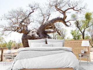Boab Prison Tree - Kimberley - Australia