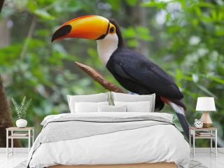 Toucan bird in Brazilian Zoo