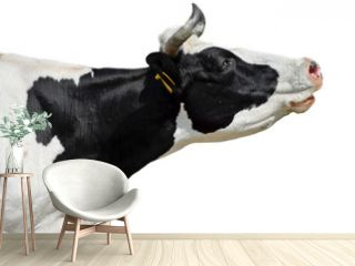 Сow isolated on white/Funny cow isolated on white