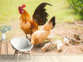 Family of chicken
