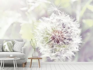 Dandelion close up on natural background
