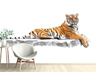 striped tiger, which lies on the rocks