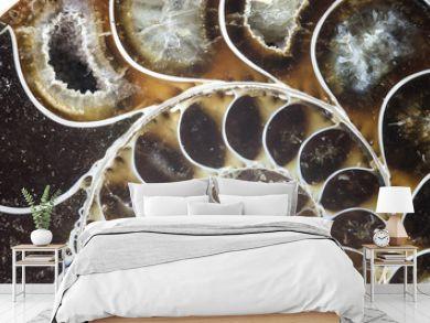 nautilus ammonite fossil shell macro texture