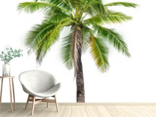 coconut palm tree isolated on white