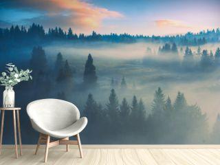 Morning misty wood