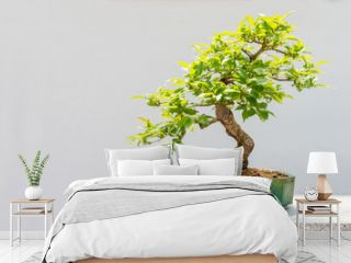 Kurile cherry tree bonsai