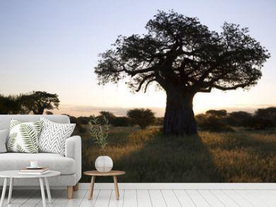 Baobab tree in african landscape