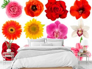 Single flower head. Rose, orchid, peony, sunflower, ranunculus