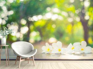 Beautiful white plumeria flower on wood table