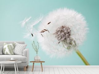 Beautiful dandelion flowers with flying feathers on turquoise background, vintage card, macro