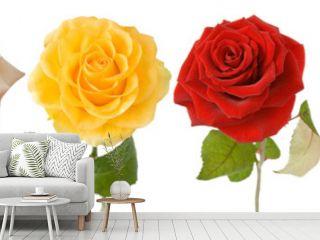 Rose set isolated on white background
