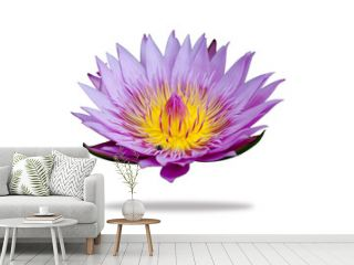 water lily isolated and white backgrounds