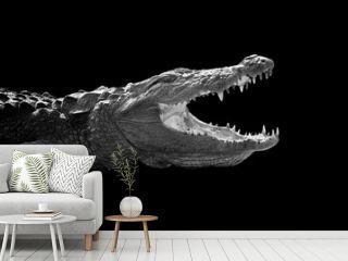 Crocodile on dark background
