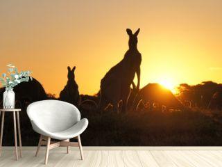 Kangaroo silhouettes at sunset
