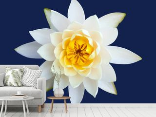 blossom water lily flower