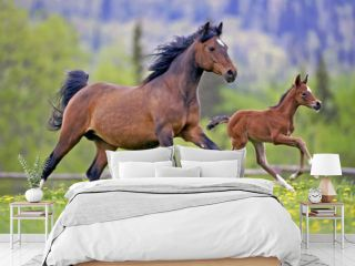 Bay Mare Horse  and Foal galloping together in spring meadow