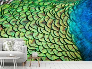 Detailed pattern of peacock feathers