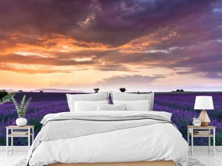 couché de soleil sur un champ de lavande
