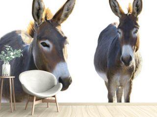 two Donkey