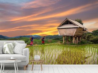 Hmong woman with rice field terrace background in Chiangmai , Th