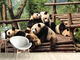 Five panda cubs relaxing in panda kindergarten