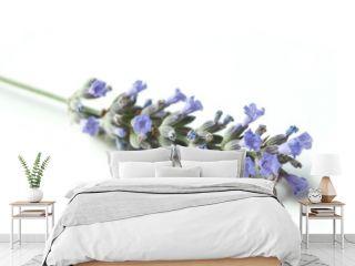 bouquet de lavande sur fond blanc