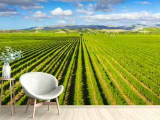 Vineyard Marlborough region, New Zealand