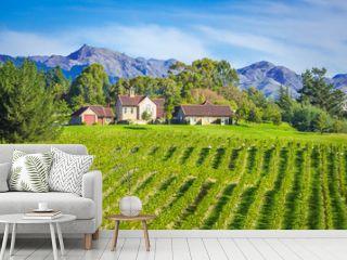 Small Vineyard Marlborough region, New Zealand