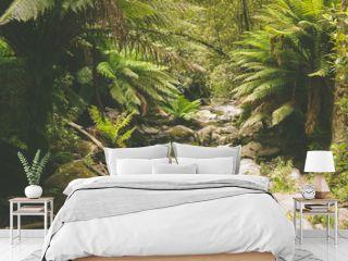 Gemäßigter Regenwald bei den Erskine Falls, Great Ocean Road in Australien