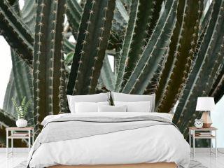 Cactus in Queen Sirikit Botanic Garden