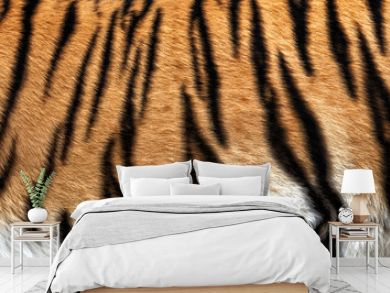 real tiger skin texture, fur