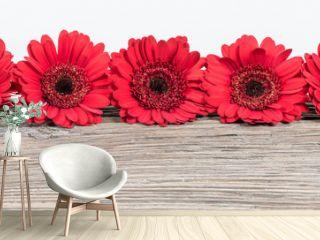 Red Gerbera Daisy flowers border.