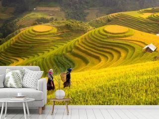 Vietnam. Rice fields prepare the harvest at Northwest Vietnam