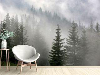 pine forest in mist