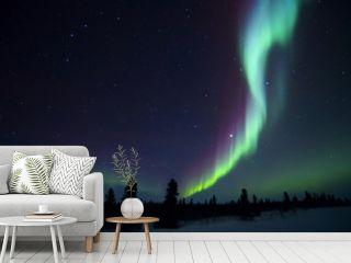 Nightsky lit up with aurora borealis, northern lights, wapusk national park, Manitoba, Canada.