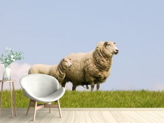 sheep and lamb standing on pasture
