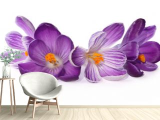 Fleurs de crocus violets