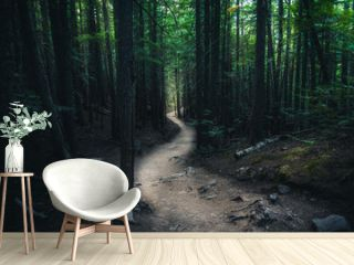 Winding forest trail.