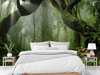 Asia rainforest