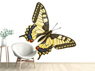Colorful butterfly on a white background